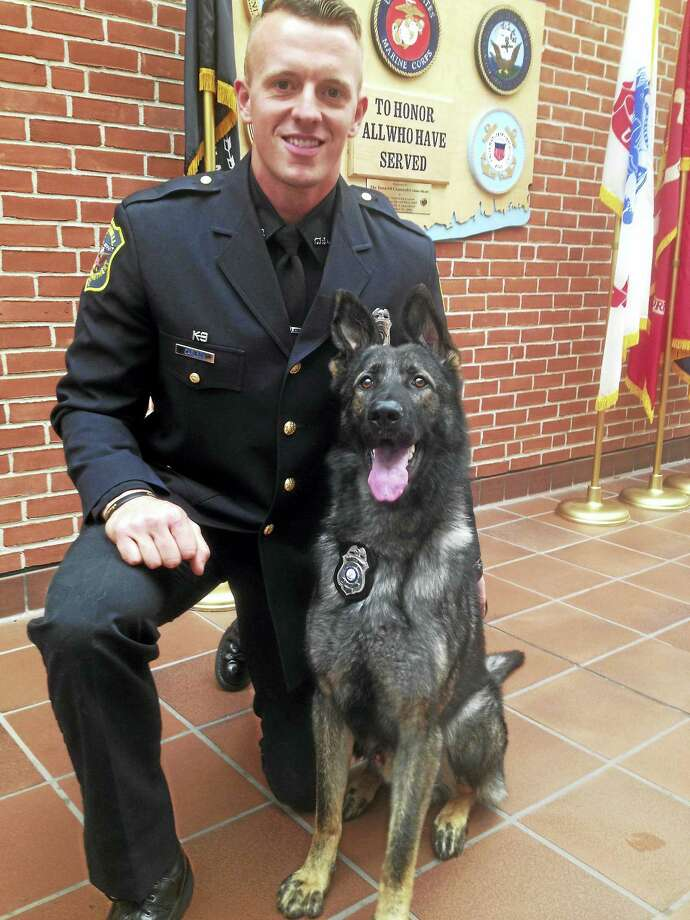 Cromwell Police Department canine handler Officer Carlson and his new partner Bane Photo: Jeff Mill —Connecticut Hearst Media
