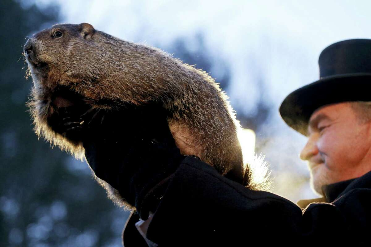 Groundhog Club handler John Griffiths holds Punxsutawney Phil, the weather predicting groundhog, during the annual celebration of Groundhog Day on Gobbler's Knob in Punxsutawney, Pa.