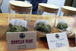 Marijuana including the store's best-seller, Gorilla Glue, available for sale at Rainforest Farms, owned by James and Giono Barrett in Juneau, Alaska. The Barrett brothers have a dream: that some of the scores of cruise ship passengers who crowd the streets of the state capital each summer will one day use their shore excursions to kick back and light up a joint in a pot store's lounge.