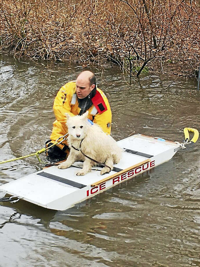 Sophie, a 9-year-old diabetic and nearly blind dog, is rescued from a stream off Millbrook Road in Middletown, by South Fire District firefighter Jason Hurlbut Thursday. Photo: Courtesy Chief Robert Ross