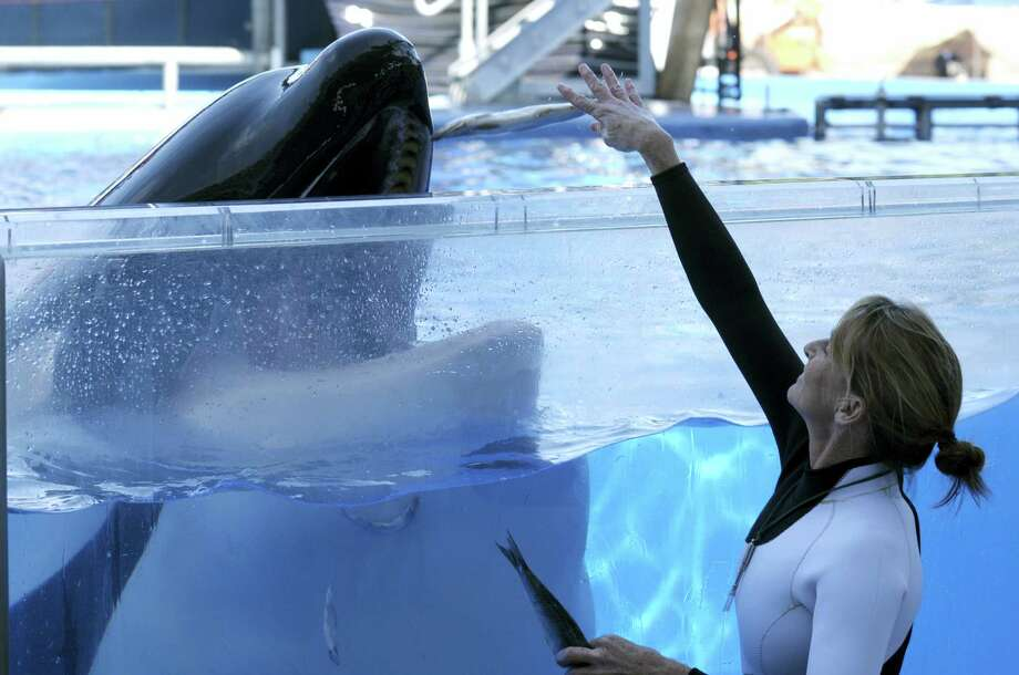 Kelly Flaherty Clark, right, director of animal training at SeaWorld Orlando, works with killer whale Tilikum during a training session at the theme park's Shamu Stadium in Orlando, Fla in 2011. Tilikum, an orca that killed a trainer at SeaWorld Orlando in 2010, has died. According to SeaWorld, the whale died Friday, Dec. 30. 2016. Photo: Phelan M. Ebenhack — AP File Photo / FR121174 AP