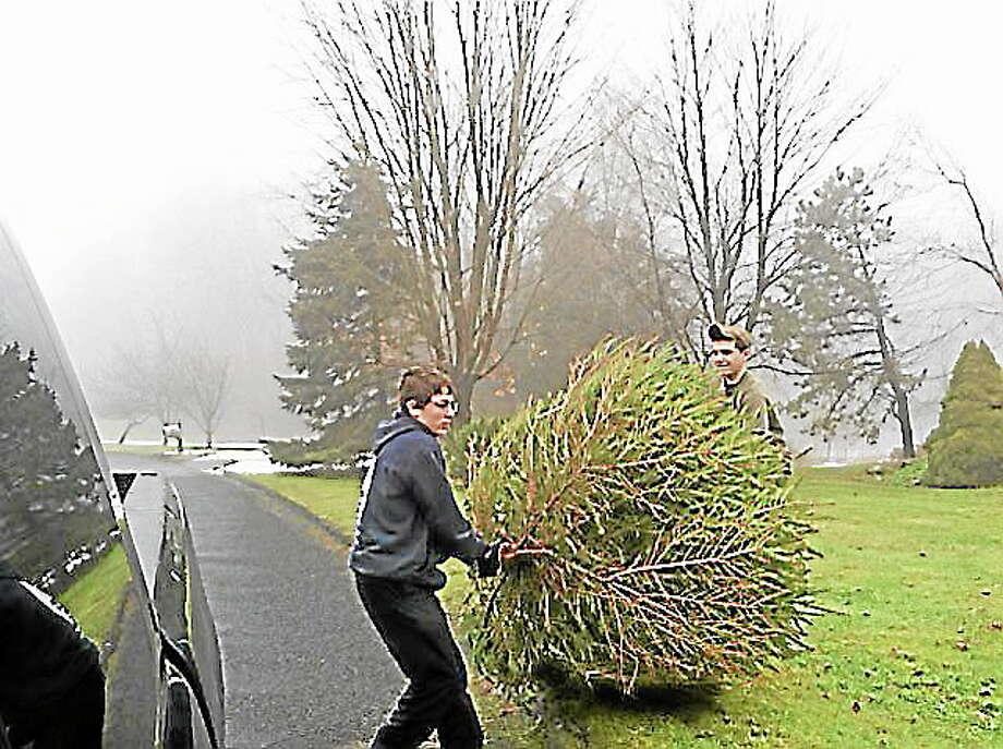 Cromwell begins Christmas tree pickup next week - The Middletown Press
