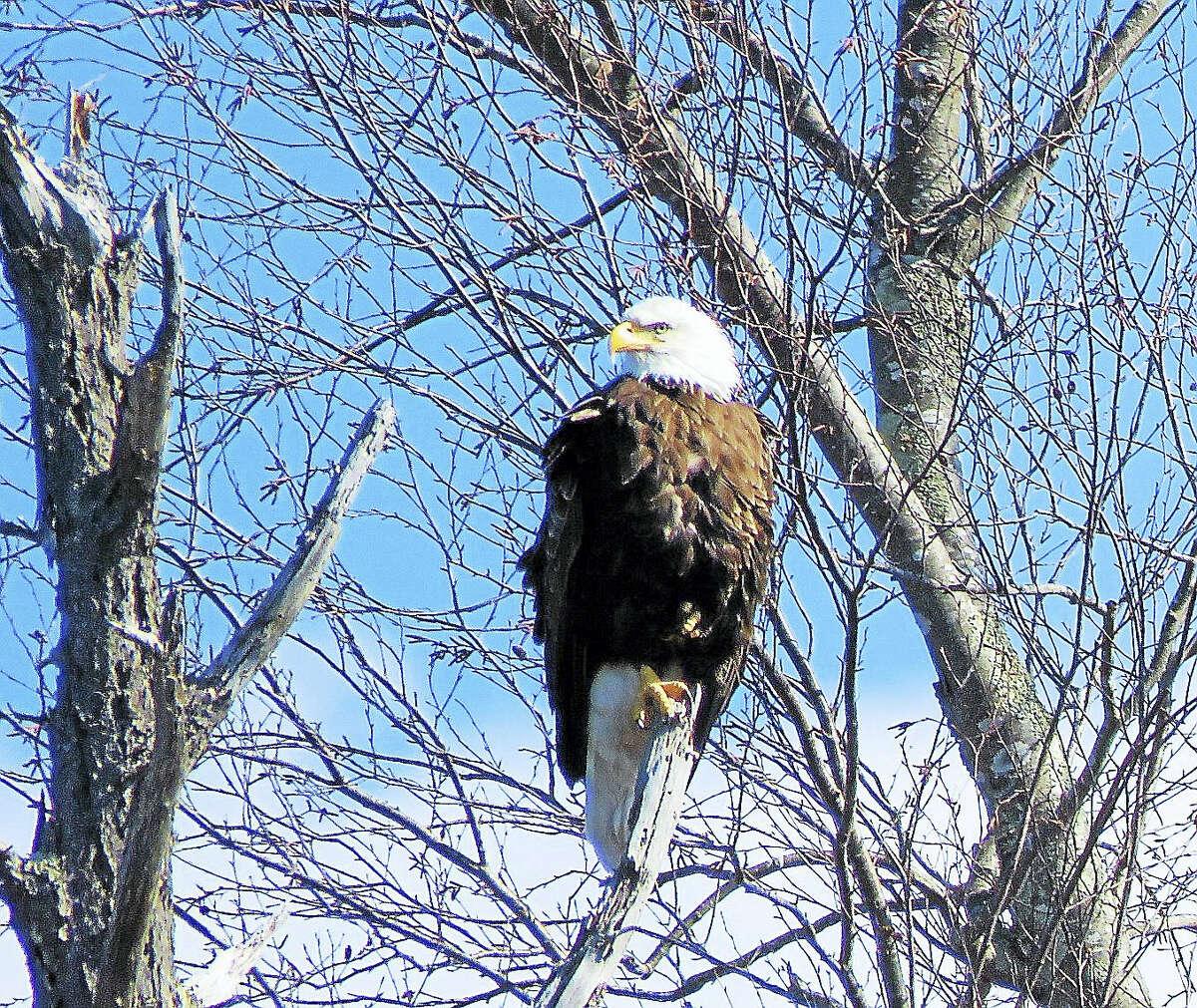 Connecticut River Expeditions RiverQuest offers cruises in April, providing an opportunity to see wildlife in its natural habitat.