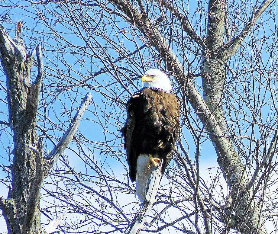 Connecticut River Expeditions RiverQuest offers cruises in April, providing an opportunity to see wildlife in its natural habitat. Photo: Www.ctriverexpeditions.org.