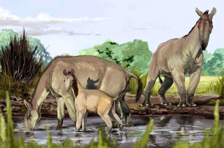 An artist's rendition of Macrauchenia patachonica. Photo: Jorge Blanco, American Museum Of Natural History   / American Museum of Natural History