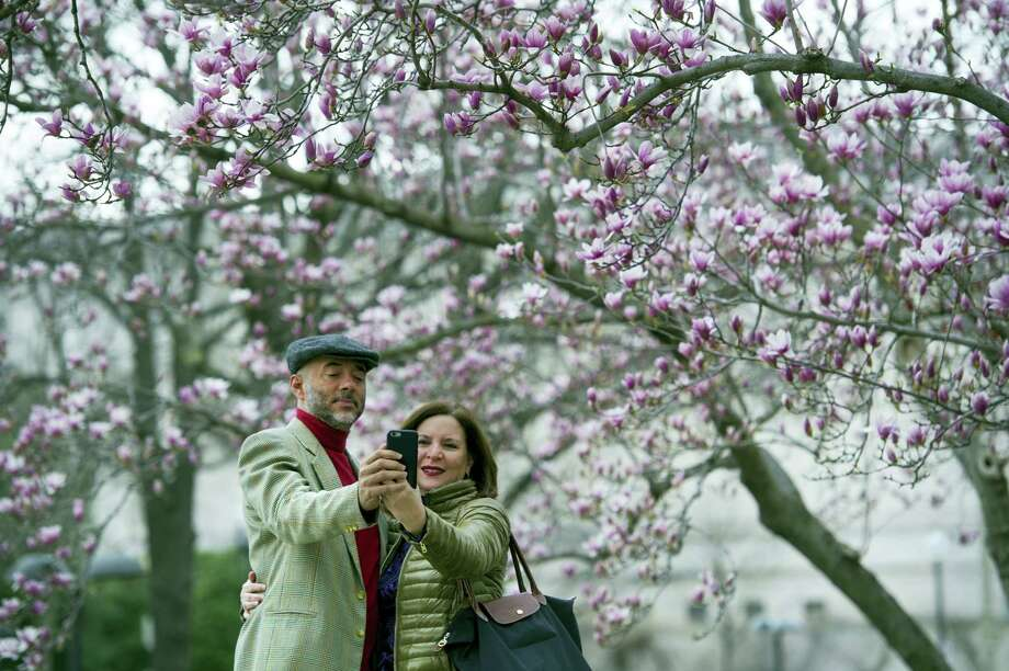 Crocuses, cherry trees, magnolia trees and others bloomed several weeks early this year because of an unusually warm February. Some climate experts say it looks like, because of an assist from global warming, spring arrived earlier than ever before. Photo: AP Photo — Cliff Owen  / FR170079 AP