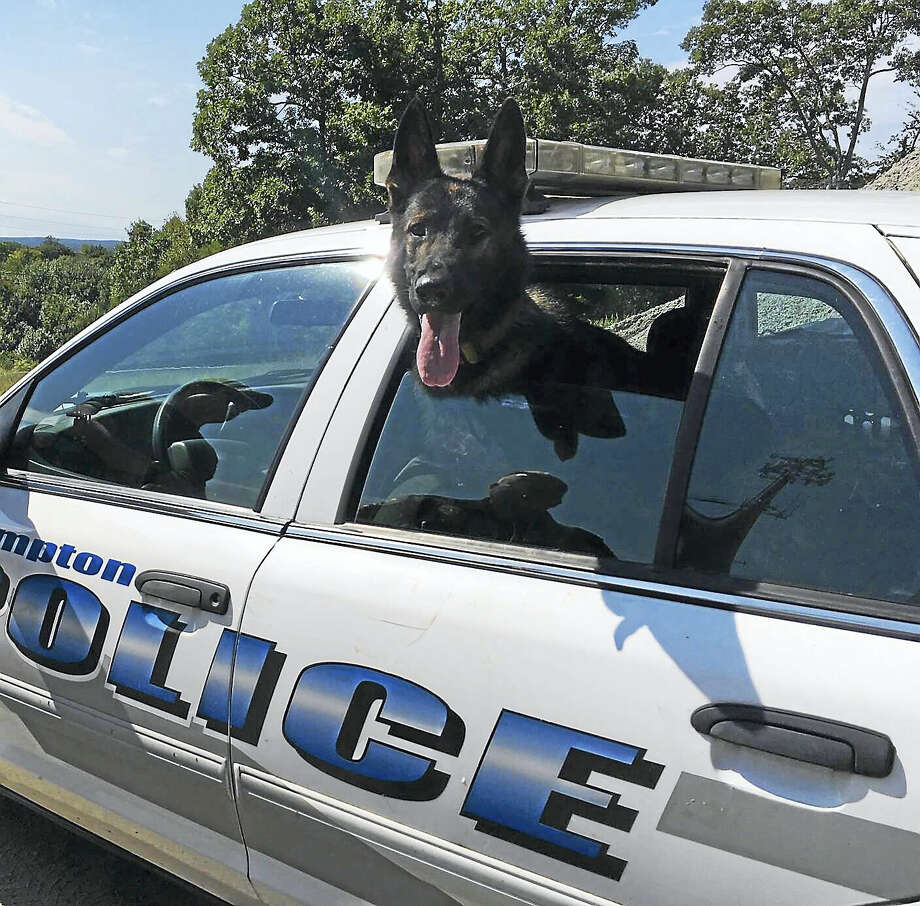 East Hampton Police Department's canine Ringer was assisting in the search for the carjacking suspect, police said. Photo: Courtesy East Hampton Police