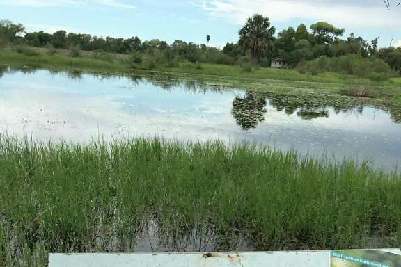 Wetlands in the refuge attract both migratory and resident birds.