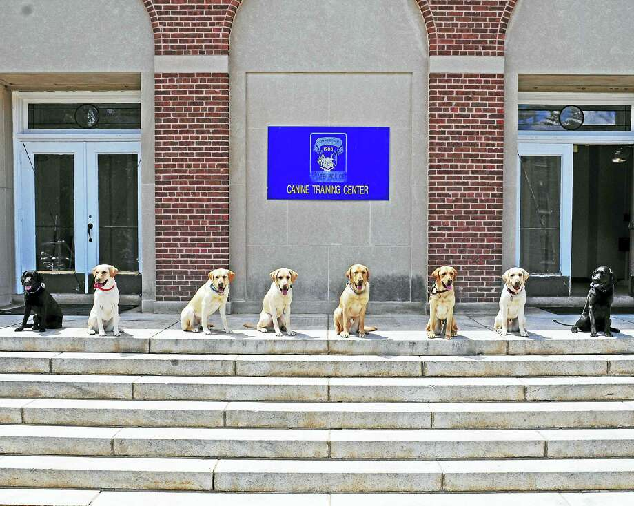 Dogs graduate from the Connecticut State Police K-9 Training Facility Photo: File Photo