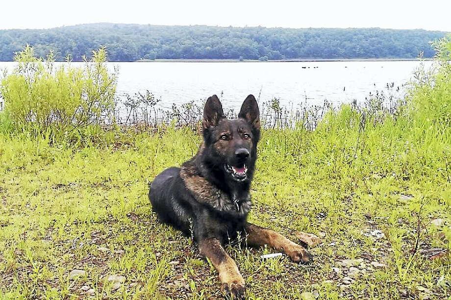 Police canine Photo: File Photo