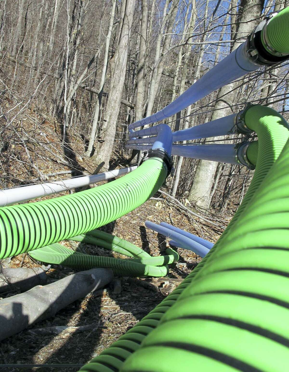 Sap and vacuum lines owned by Crown Maple of Dutchess County, N.Y., run through a forest in Sandgate, Vt.