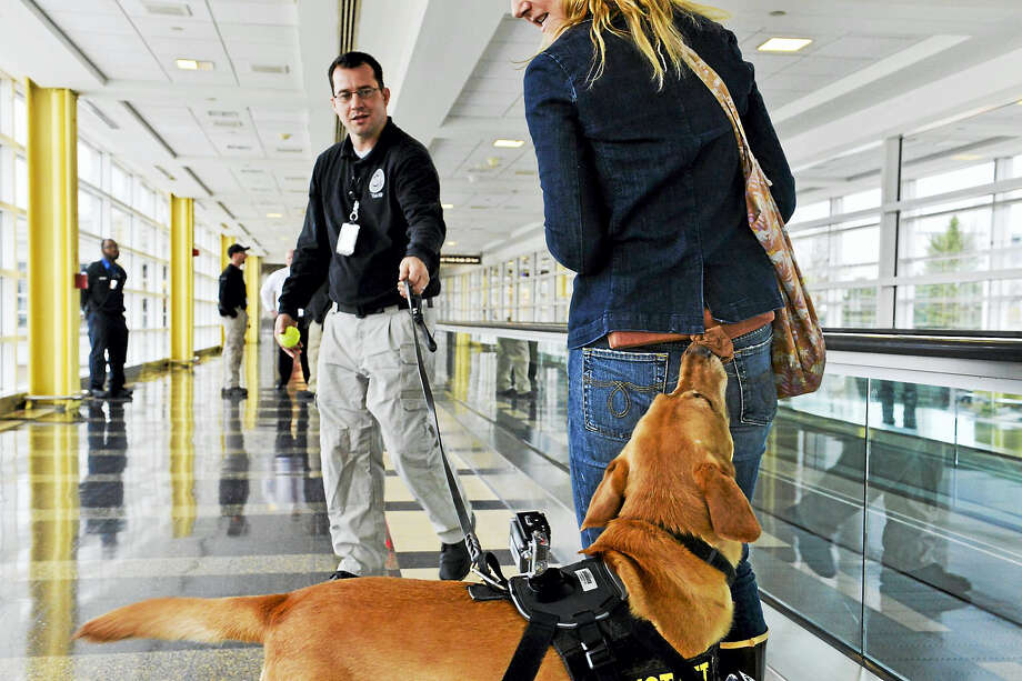 Rriverso leads his handler, Douglas Timberlake, to the author, who is wearing a suspicious substance as part of the TSA's ongoing training of the working dogs. Photo: Washington Post Photo By Jahi Chikwendiu / The Washington Post