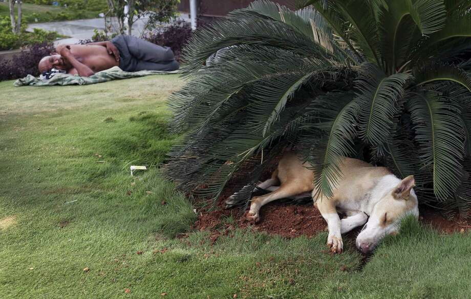 A stray dog and a homeless person sleep under bushes on a hot summer afternoon in Hyderabad, India, Friday, May 20, 2016. The prolonged heat wave this year has already killed hundreds and destroyed crops in more than 13 states. The extreme heat has impacted hundreds of millions in western India with record temperatures Friday reaching as high as a scorching 51 degrees Celsius (123.8 Fahrenheit). Photo: AP Photo/Mahesh Kumar A.   / Copyright 2016 The Associated Press. All rights reserved. This material may not be published, broadcast, rewritten or redistribu