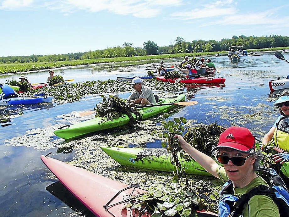 Canoe and kayak paddlers help to remove invasive water chestnut plants from the Floating Meadows with the Jonah Center of Middletown. Photo: Contributed Photo