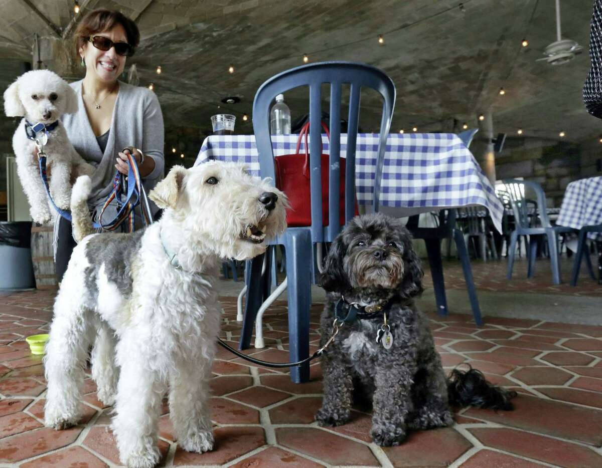 """In this May 19, 2015, file photo, Michelle Vargas, with, from left, 8-year-old Bichon Frise-Poodle mix """"Carmine,"""" 11-year-old Wire Haired Terrier """"Lucy,"""" and 10-year-old Shih Tzu-Poodle mix """"Luigi,"""" visit a cafe in a Manhattan park, on New York's Upper West Side. New York City restaurants with outdoor tables will soon be able to welcome four-legged guests under new rules announced by the city Health Department.The regulations announced Tuesday March 15, 2016, will permit dogs that are licensed and vaccinated against rabies to join their human chowhounds at participating restaurants."""