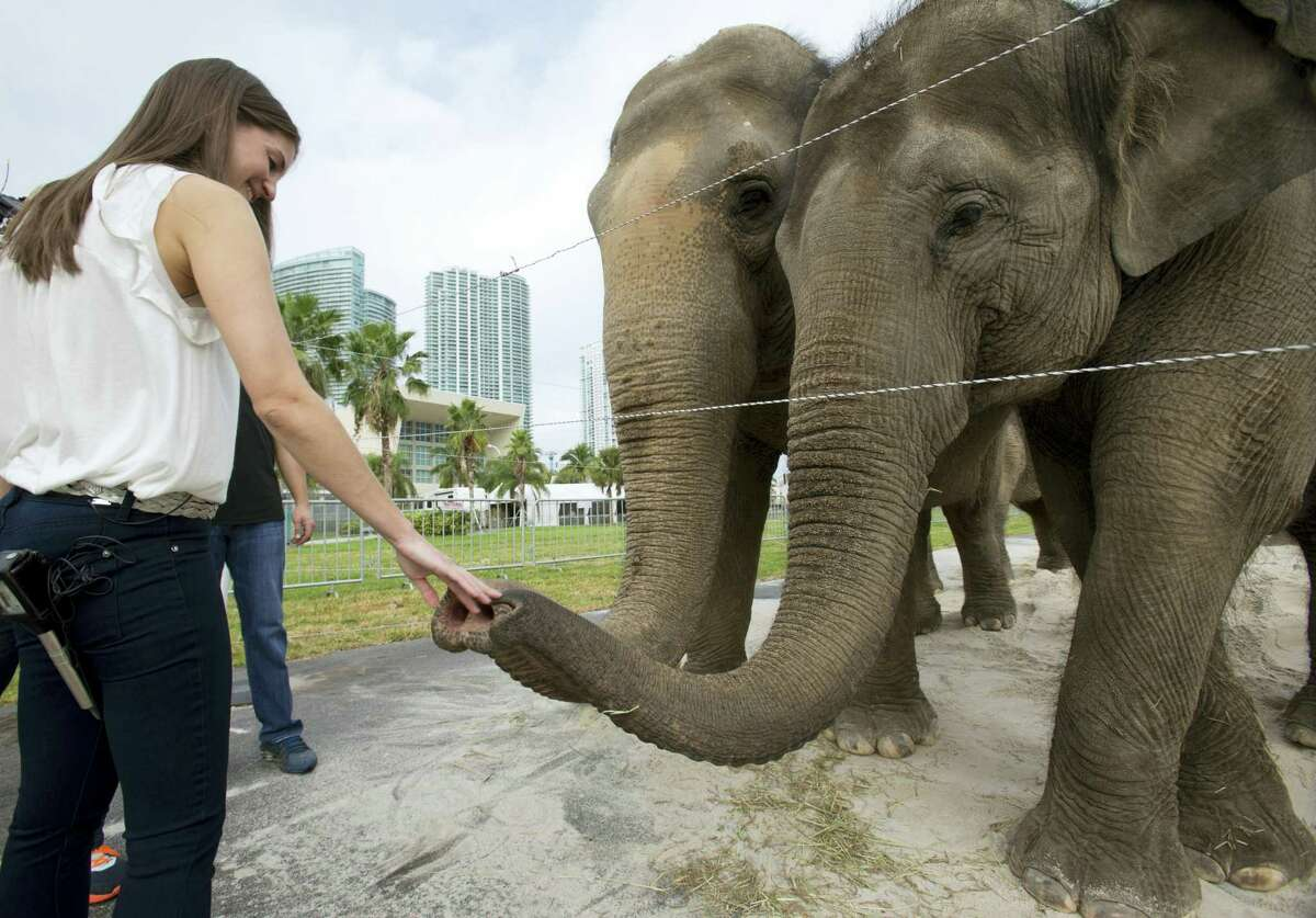 In this Jan. 8, 2016 photo, Alana Feld, Ringling Bros. and Barnum & Bailey Circus' executive vice president and show producer, interacts with Asian elephants outside the American Airlines Arena in Miami. Feld owns the largest herd of Asian elephants in North America.