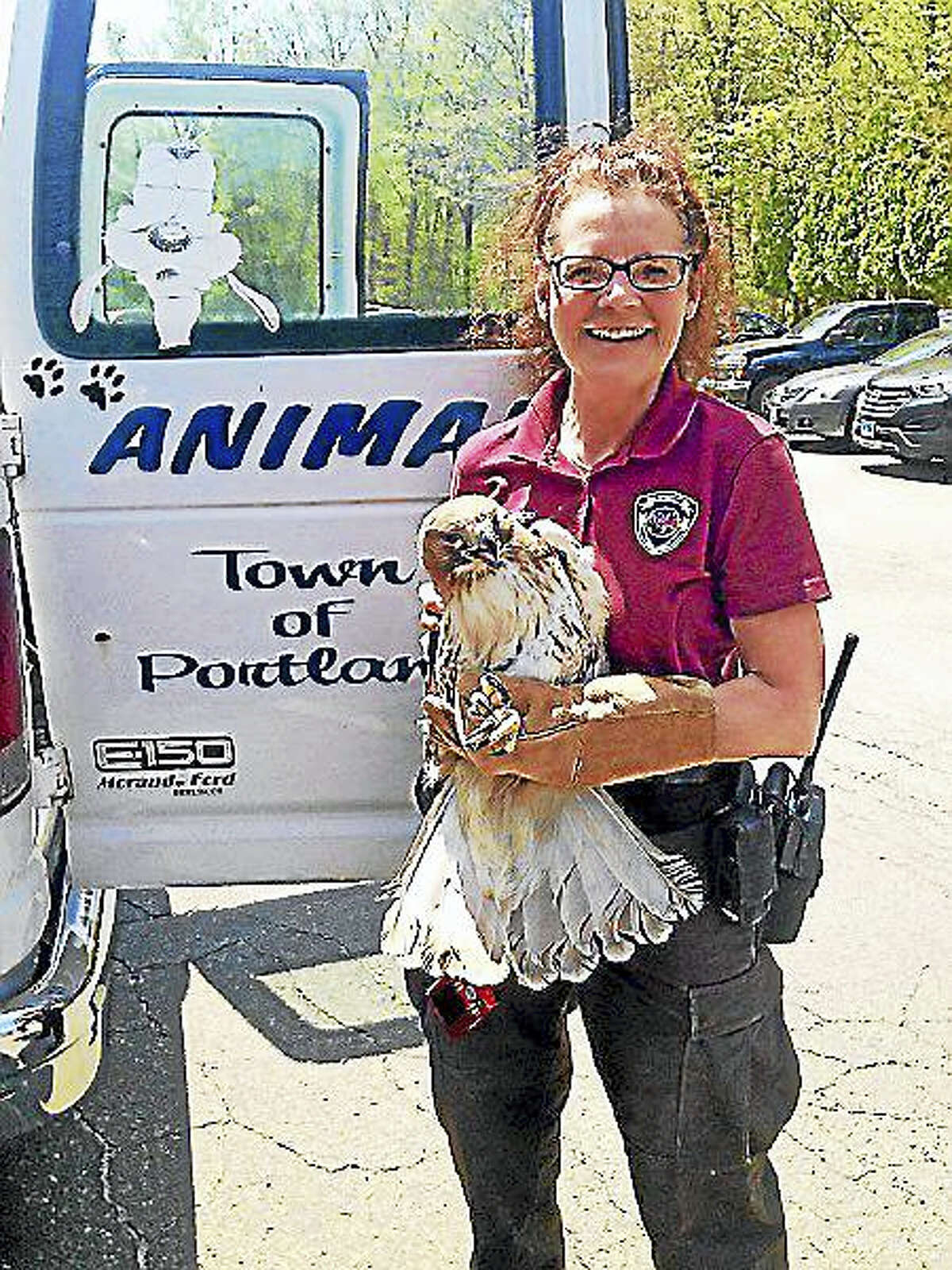 Karen Perruccio to the rescue when a red-tailed hawk became entangled in a net at the Portland West golf course Thursday.