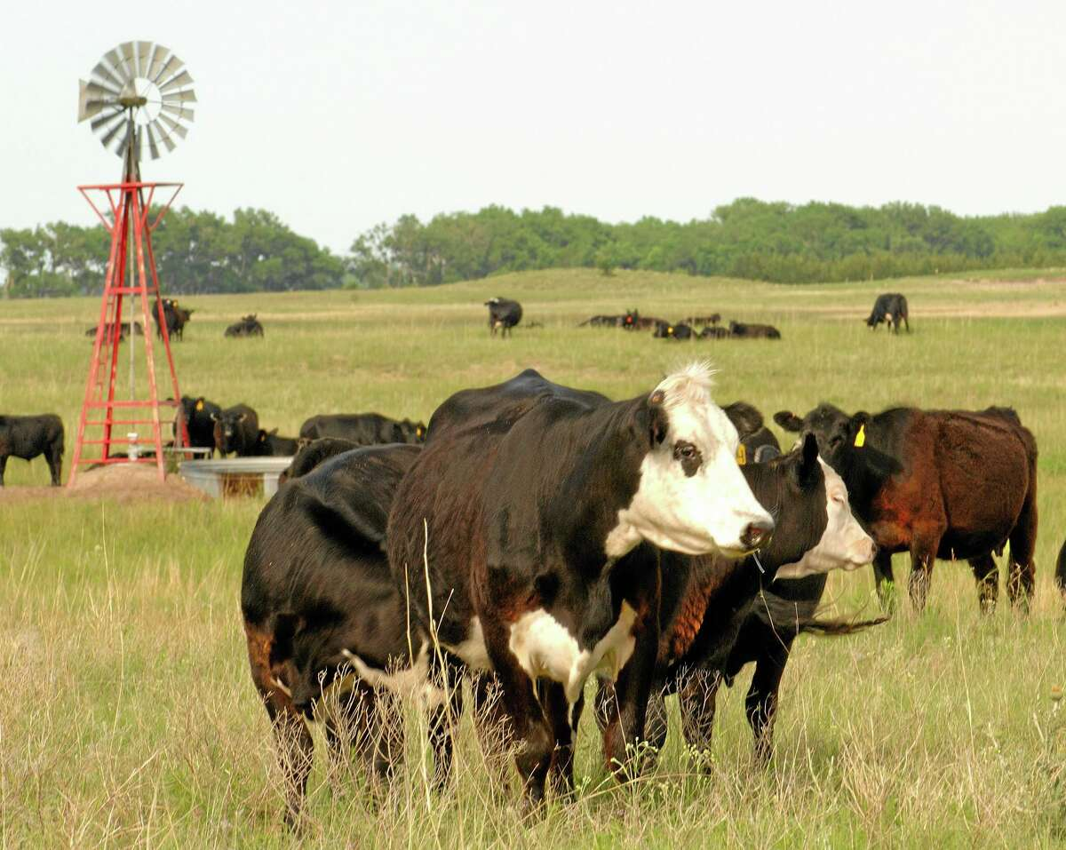 FILE - This June 18, 2009 file photo shows cows grazing in Rock County, Neb. .