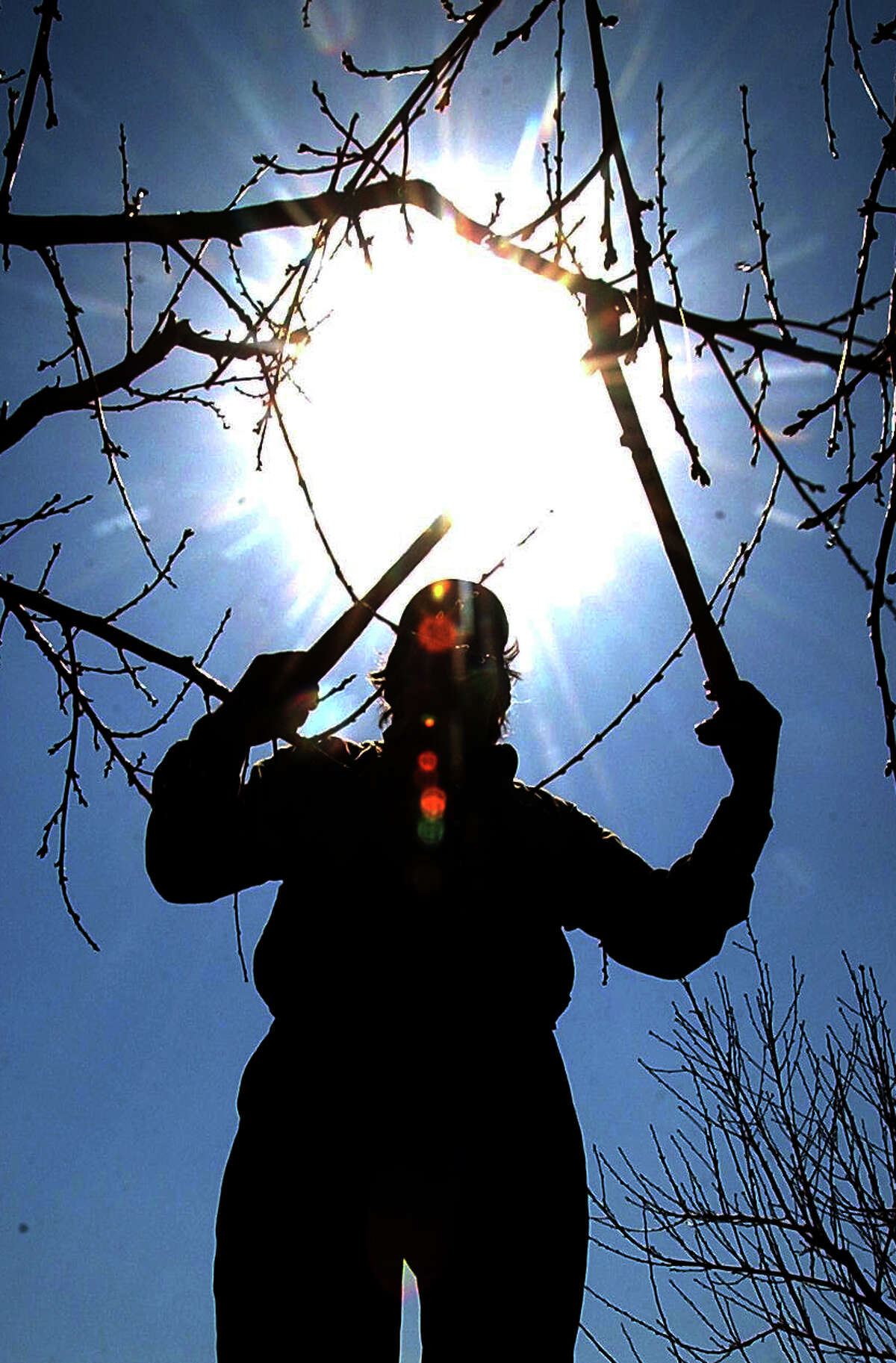 """3/20/2007 WEEKLY RECORD - FILE Adolfo Barajas of Mexico prunes a fruit tree at Blevins Fruit Farm in Hopewell Township in 2003. According to The International Society of Arboriculture, pruning is the most common tree-maintenance procedure. For more on trees, see page 8. local by bil. Blevins Fruit Farm in Hopewell Township boasts 200 acres of fruit trees, and Adolfo Barajas and his five-man crew will cut, trim and shape every tree. It's a long process, Barajas says, forcing the 57-year old to leave his home in Mexico in February and not return until October. Barajas has worked for owner Kent Blevins for nine years, trimming trees seven or eight trees an hour for ten hours a day. Barajas and his five man crew come north to work because here, he says, he'll be paid for one day's work what he'll make in a week in Mexico. Blevins acknowledges it's hard work. Barajas doesn't mind. """"I like work. I am strong,"""" he says. MEXI 2"""