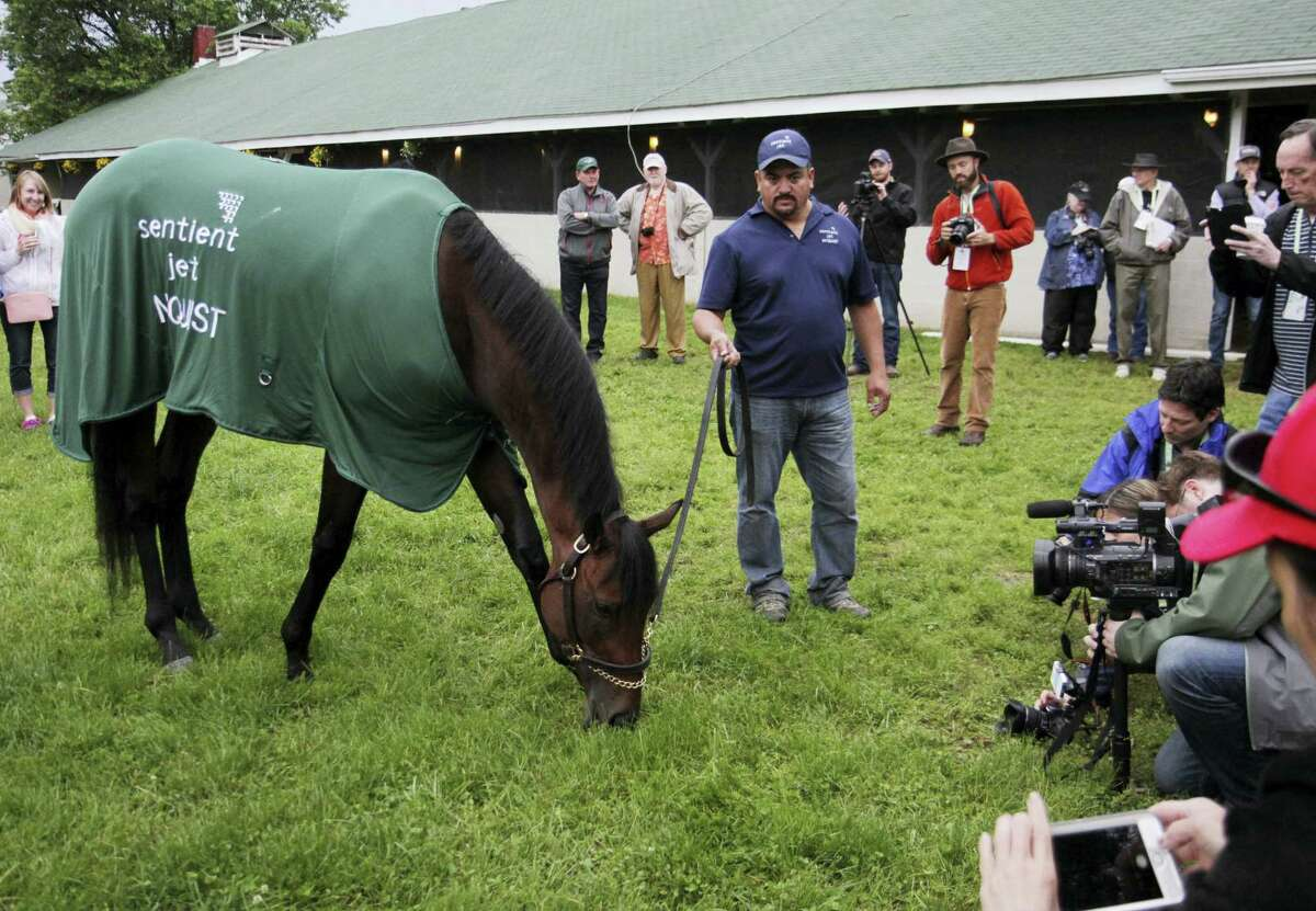 Kentucky Derby winner Nyquist grazes as members of the media gather around at Churchill Downs on Sunday.