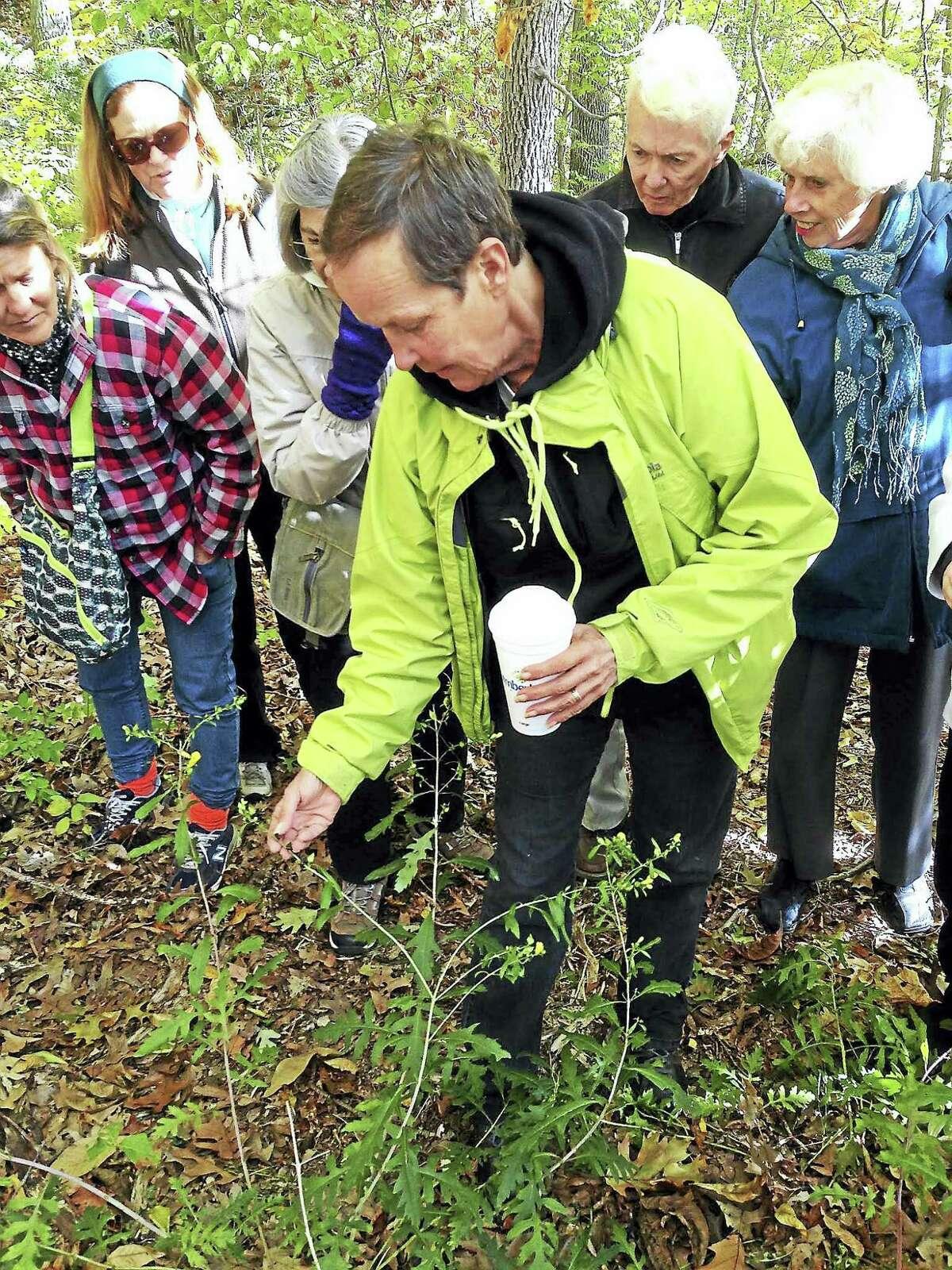Sam Saulys leads a previous Branford Land Trust Nature Explorer walk.