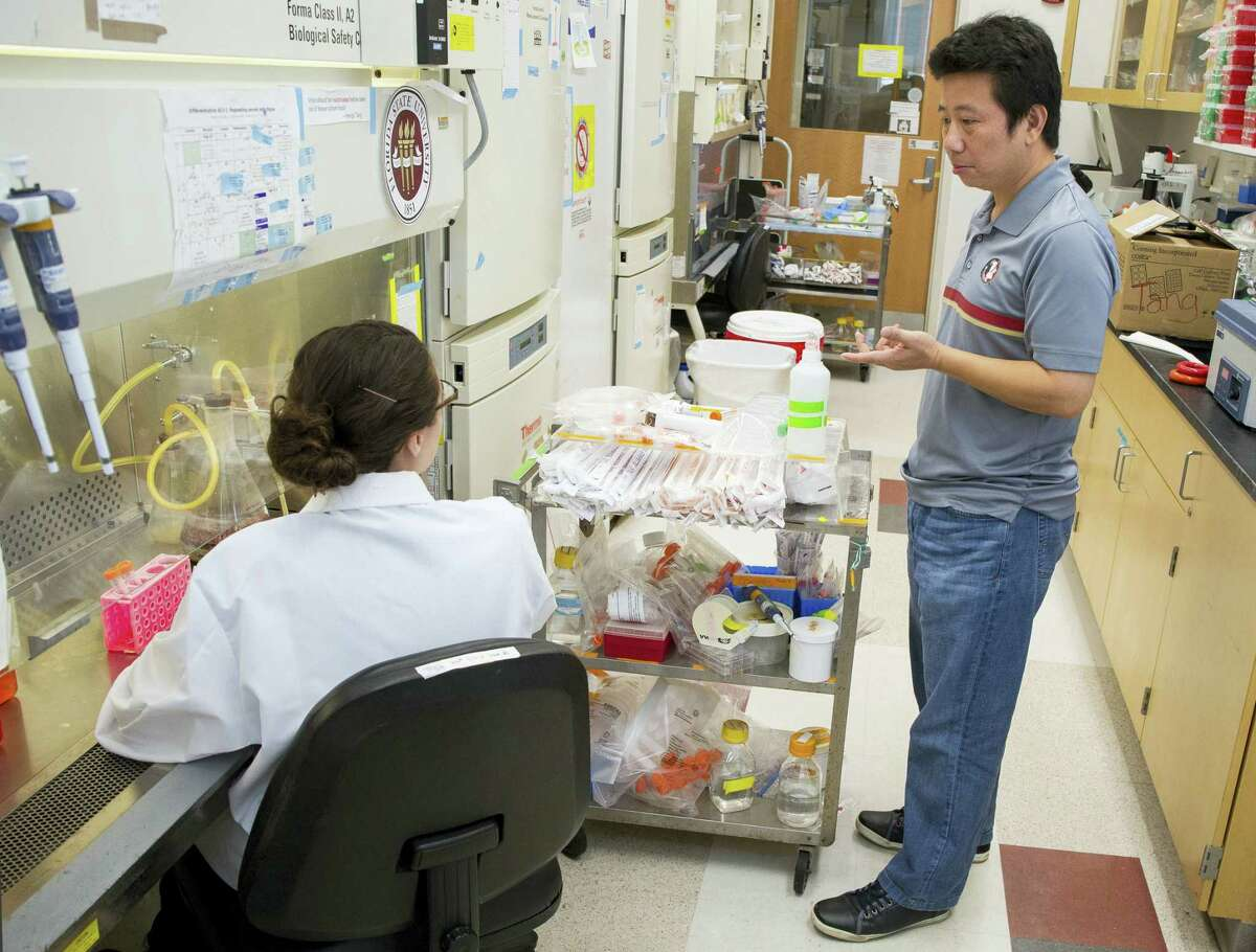 In this photo taken on Monday, Feb. 29, 2016, provided by Florida State University, Professor Hengli Tang confers with his graduate student and co-author Sarah Ogden about the next steps in their Zika virus research in Tang's lab at FSU, in Tallahassee, Fla. Tang is a lead author of a lab study that found the Zika virus infects embryonic cells that help form the brain, adding to evidence that Zika causes a serious birth defect. The new work provides experimental evidence that once the virus reaches the developing brain, it can infect and harm cells that are key for further brain development, said Tang.
