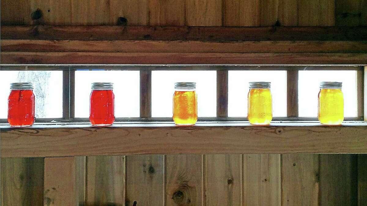 Sunlight illuminates jars of freshly made Durham Sugarhouse maple syrup.