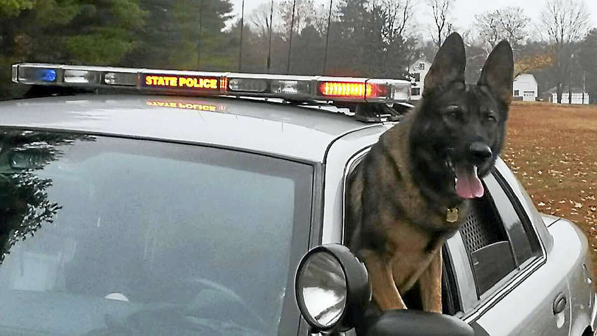 Connecticut state police German shepherds are trained in many facets of detective work, including tracking, building searches, evidence recovery and narcotics detection.