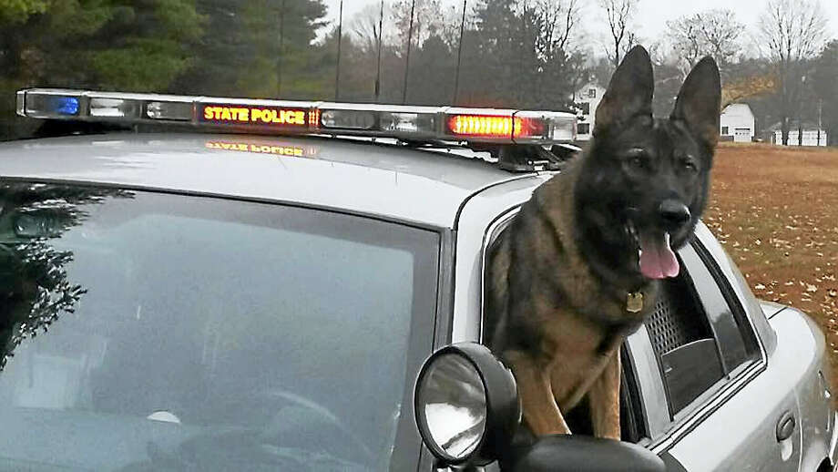 Connecticut state police German shepherds are trained in many facets of detective work, including tracking, building searches, evidence recovery and narcotics detection. Photo: Courtesy Photo
