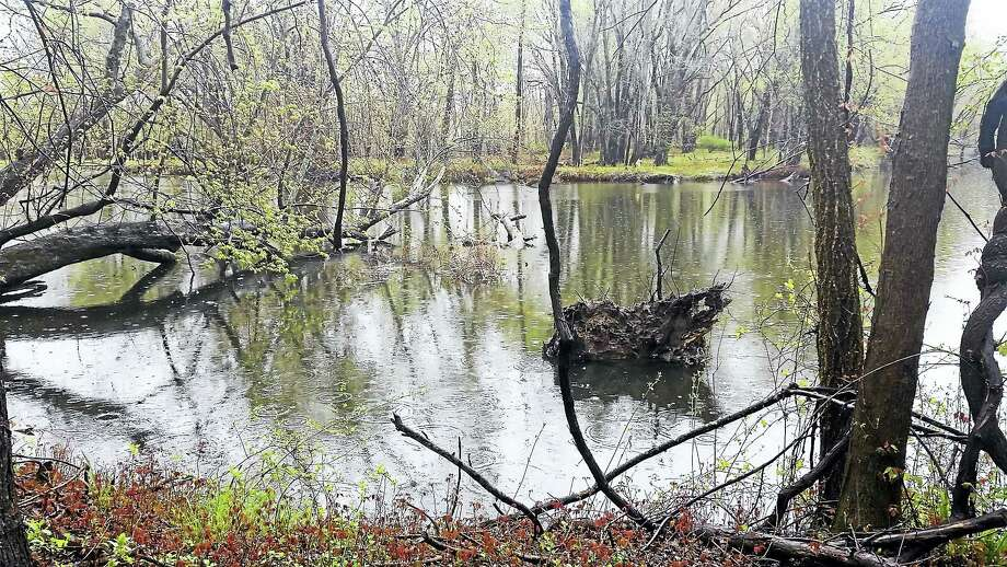 Authorities say they pulled the body of Daniel Loguidice, 32, from the Mattabasset River behind Johnson Street in Middletown Monday afternoon. Photo: Cassandra Day/The Middletown Press