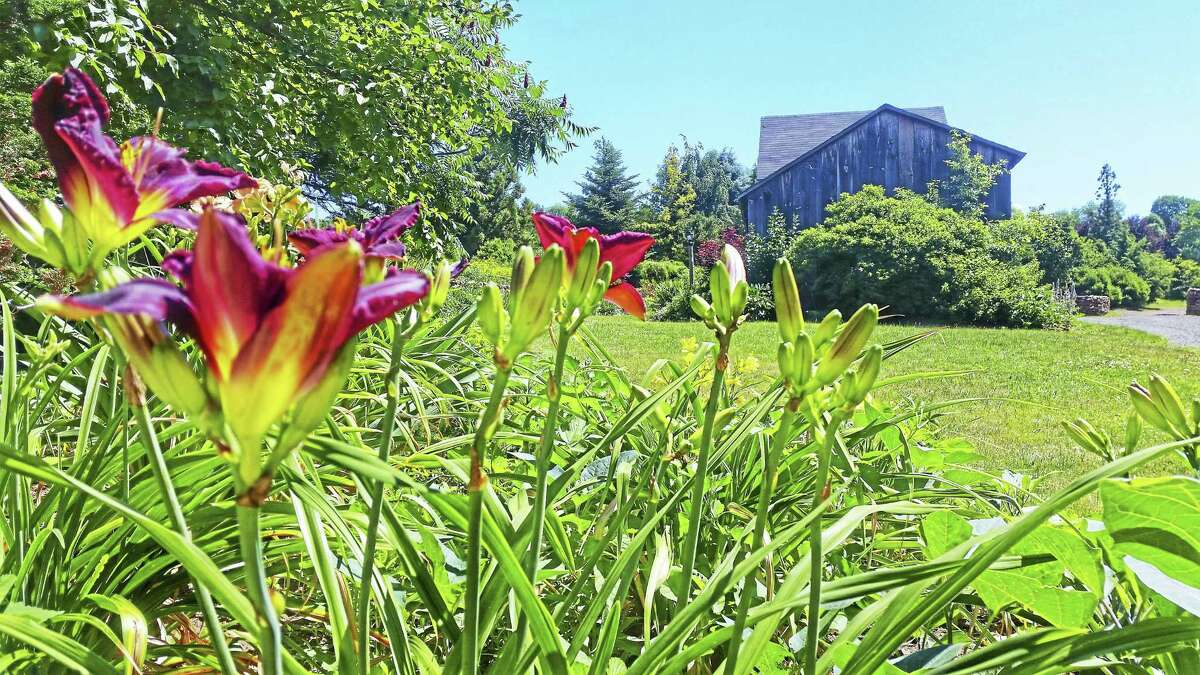 Organic vegetable, herb, flower and ornamental gardens flourish, lined by newly build brownstone walls and native wildflowers that frame walking paths throughout the Middlefield Road farm.