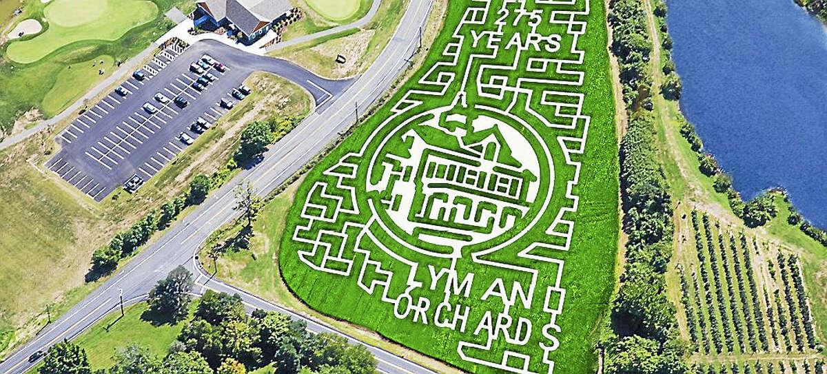 The corn maze at Lyman Orchards.