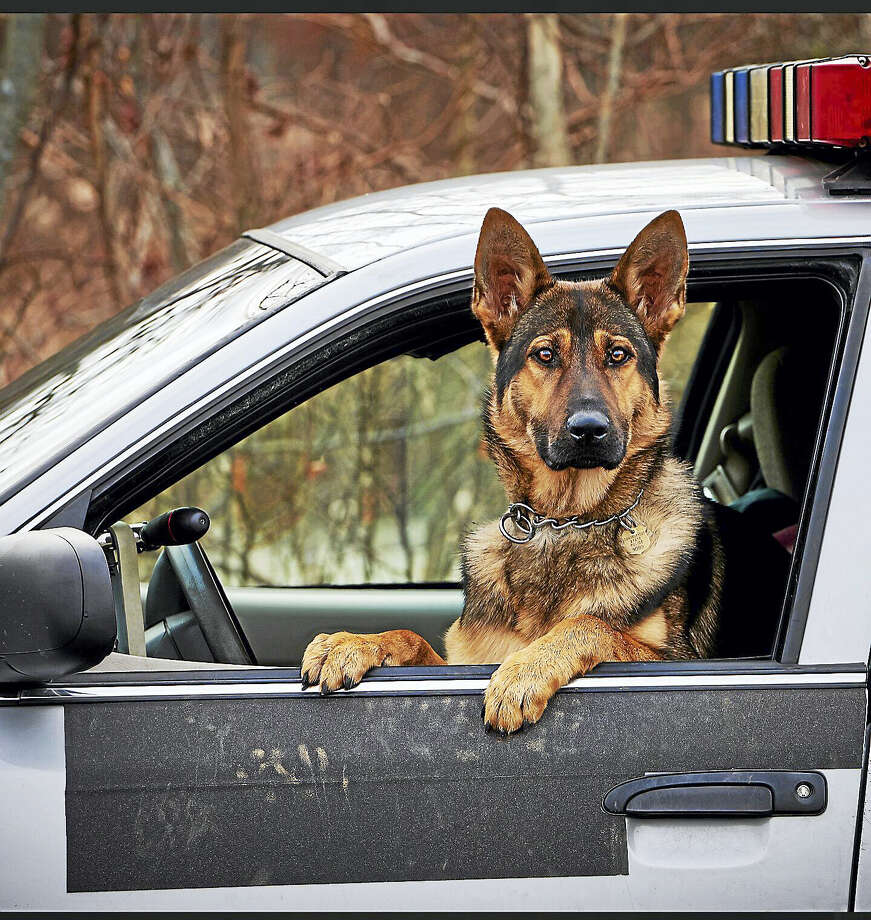 K-9 Tobi has been assigned to Trooper Bruce Lachance since September 2015 and is working at Troop L in Litchfield. Photo: Contributed Photo — Connecticut State Police
