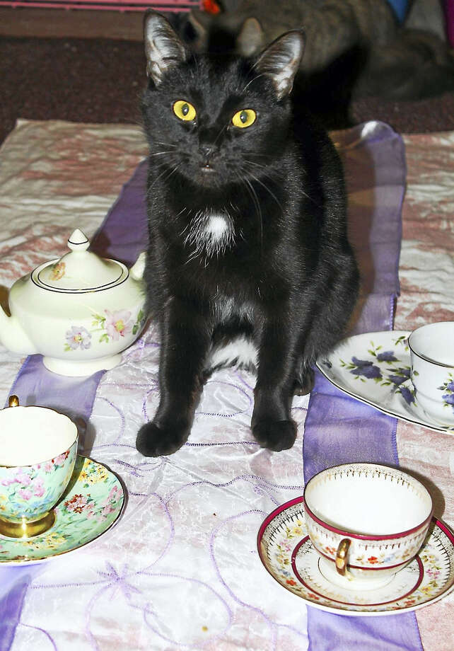 "Artemis is all set for ""Teacups & Catwalk."" Photo: Contributed"