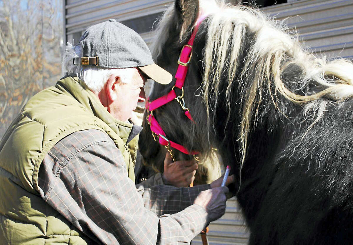 Veterinarian Dr. Bruce Sherman taking a blood sample from one of the seized horses.
