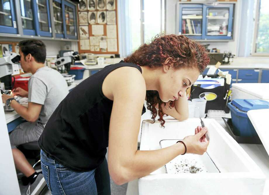 Sofia Moscovitz separates mosquitoes from other insects from a trap that had been in Woodbridge at the Connecticut Agricultural Experiment Station in New Haven.  At left is Carlos Franco looking at mosquitoes through a microscope to identify their genus and species. Photo: Arnold Gold — New Haven Register