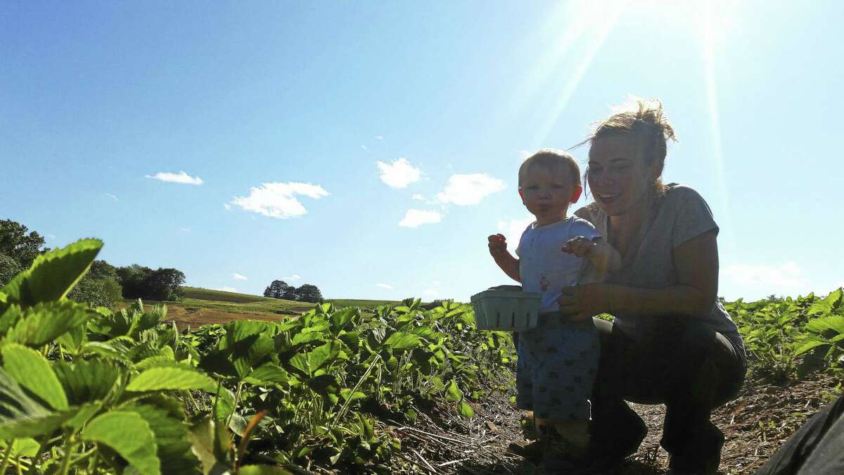 Sara Dombroski shows her son 15-month-old Caleb Foley how to pick strawberries in Middlefield on Thursday.