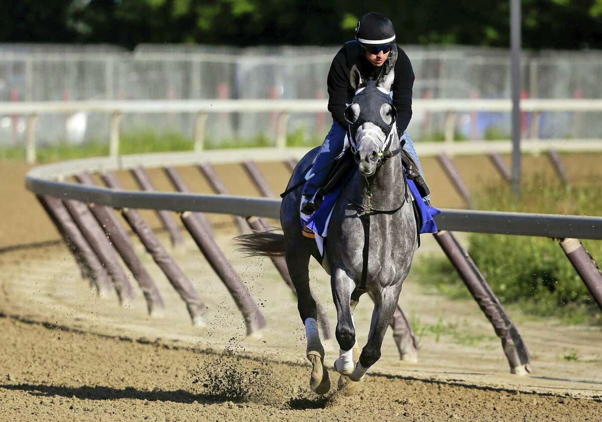 Belmont Stakes hopeful Destin gallops around the training track at Belmont Park Thursday. The New Haven Register's Dan Nowak likes Destin in the 148th running of the Belmont Stakes horse race on Saturday.