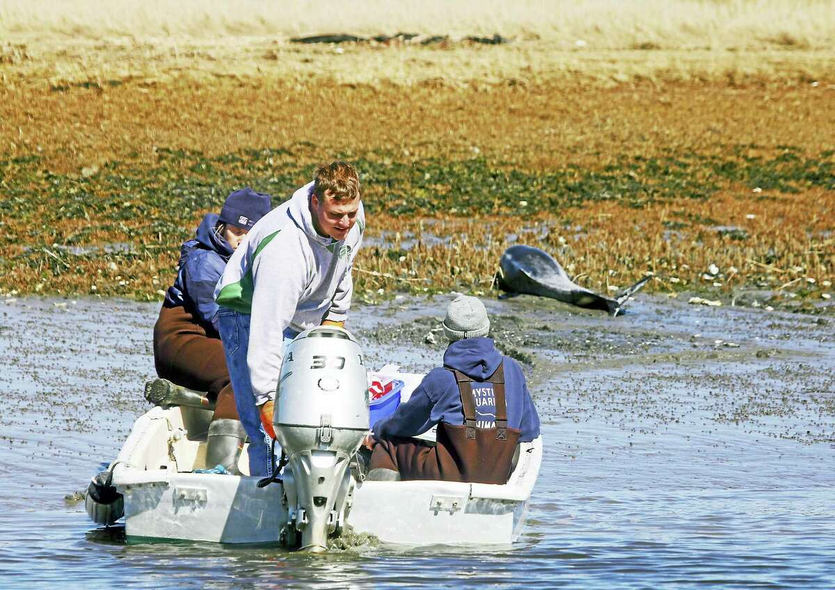 A dolphin found stranded Tuesday in Guilford was euthanized after rescue efforts.