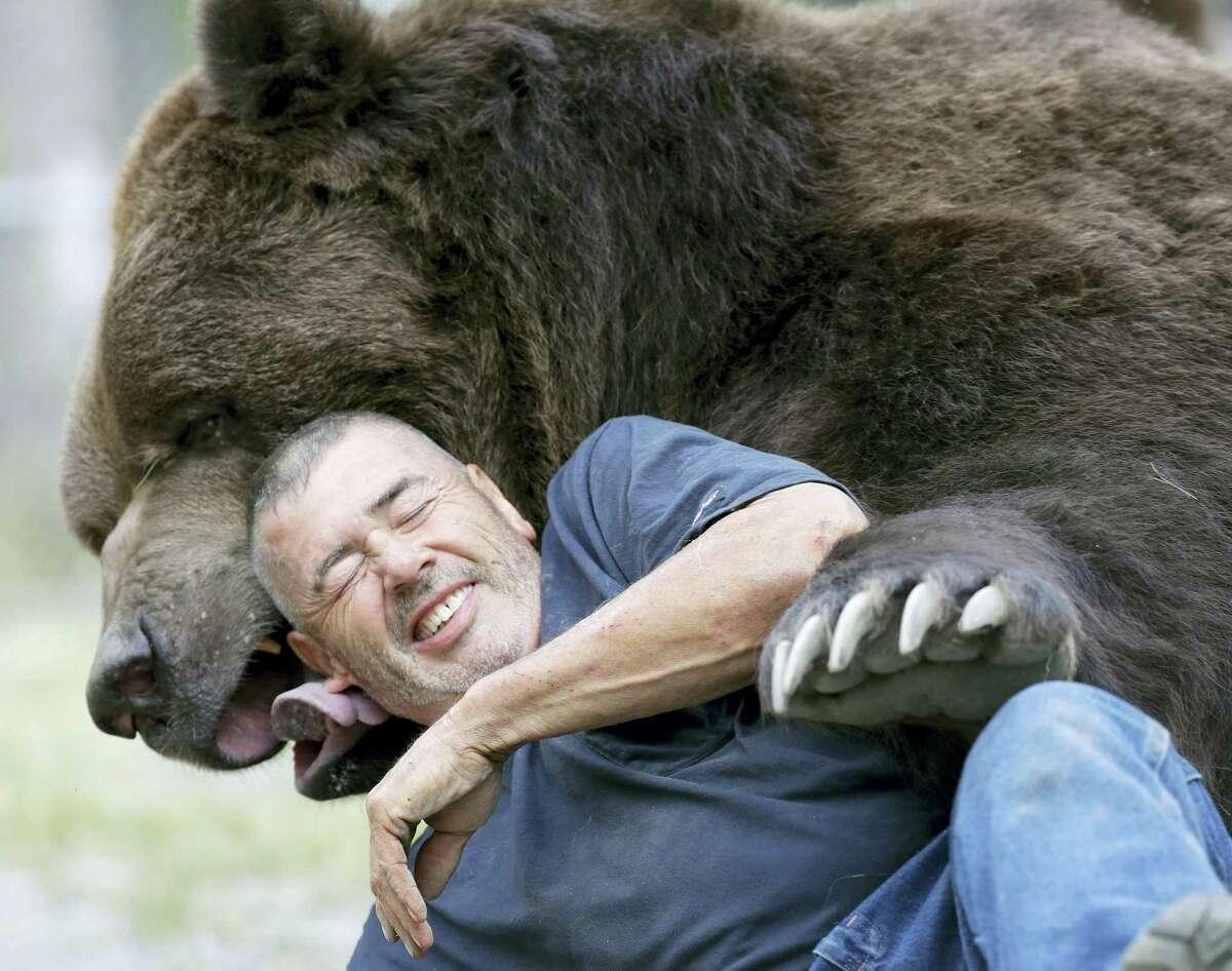 In this Wednesday photo, Jim Kowalczik plays with Jimbo, a 1500-pound Kodiak bear, at the Orphaned Wildlife Center in Otisville, N.Y.