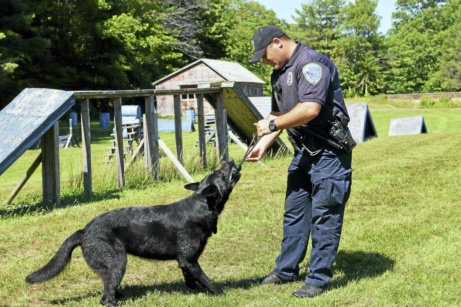 Middletown police canine handler William Maio plays with his K-9 Judge during a training demonstration last month. Photo: Cassandra Day — The Middletown Press