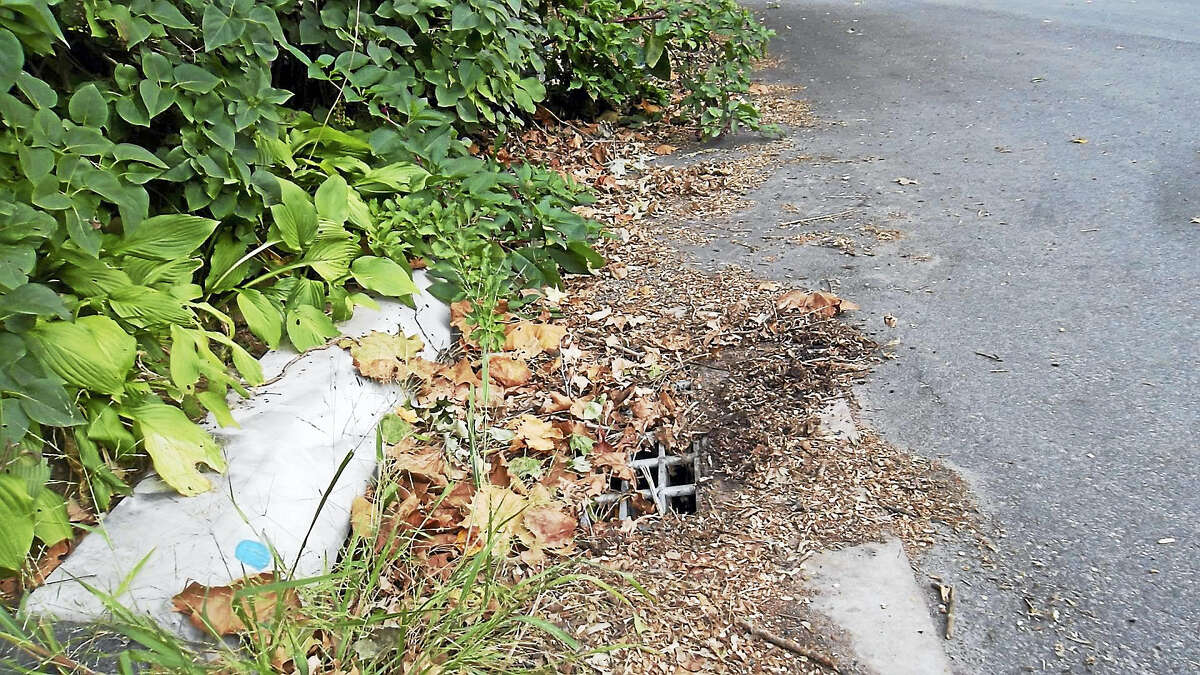 Leaves raked to the curb in East Hampton are washed by rainwater along the road to the storm drain, where they degrade into mulch.