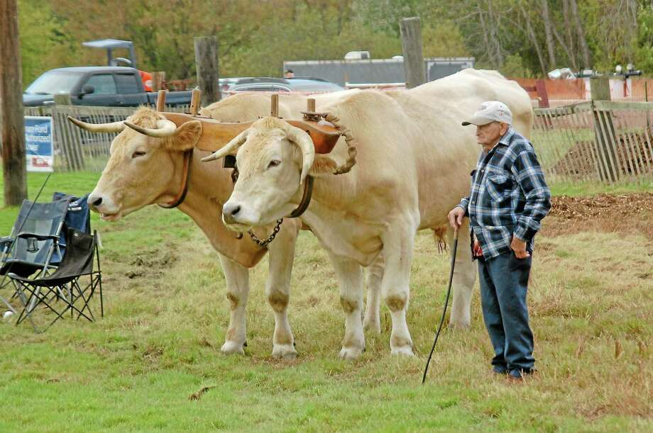 All shapes, sizes and varieties of animals will either be on display or working at this weekend's fair. Photo: File Photo