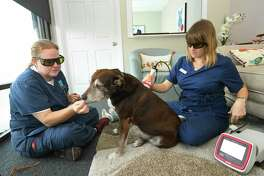 Stacie Alves and Dr Julia Spade administer acupuncture and laser therapy to a dog with arthritis. Last Wishes has assisted more than 5,000 families with their pet's care since November 2012. Earlier this year, the organization opened the first compassionate comfort care center for pets in Houston. The center features comfort rooms that are used for hospice and pain management consultations, therapeutic laser, acupuncture, and compassionate sedation-euthanasia.