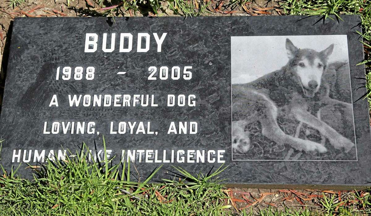A grave marker for Buddy, a beloved family pet memorialized at the Los Angeles Pet Cemetery in Calabasas, California.