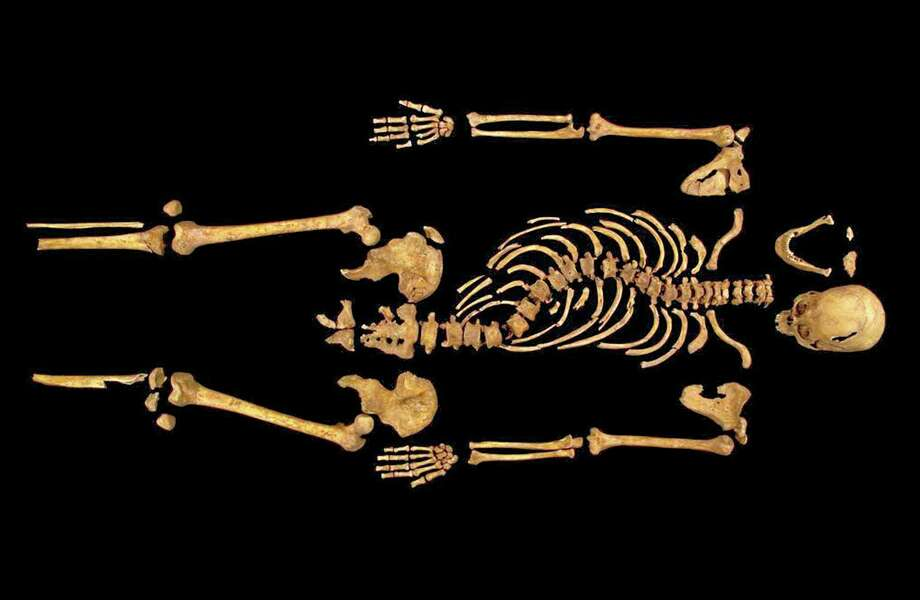 """FILE - This undated photo made available on Monday Feb. 4, 2013 by the University of Leicester, England, shows the remains found underneath a car park in Leicester, which have been declared """"beyond reasonable doubt"""" to be the long lost remains of England's King Richard III, missing for 500 years. Britain's High Court ruled Friday May 23, 2014 that the monarch, who was killed in battle in 1485, should be buried in the city of Leicester, where his skeleton was found under a parking lot in 2012. A group of distant relatives wanted him interred in the northern England city of York, to which he had strong ties. (AP Photo/University of Leicester, File) Photo: AP / University of Leicester"""