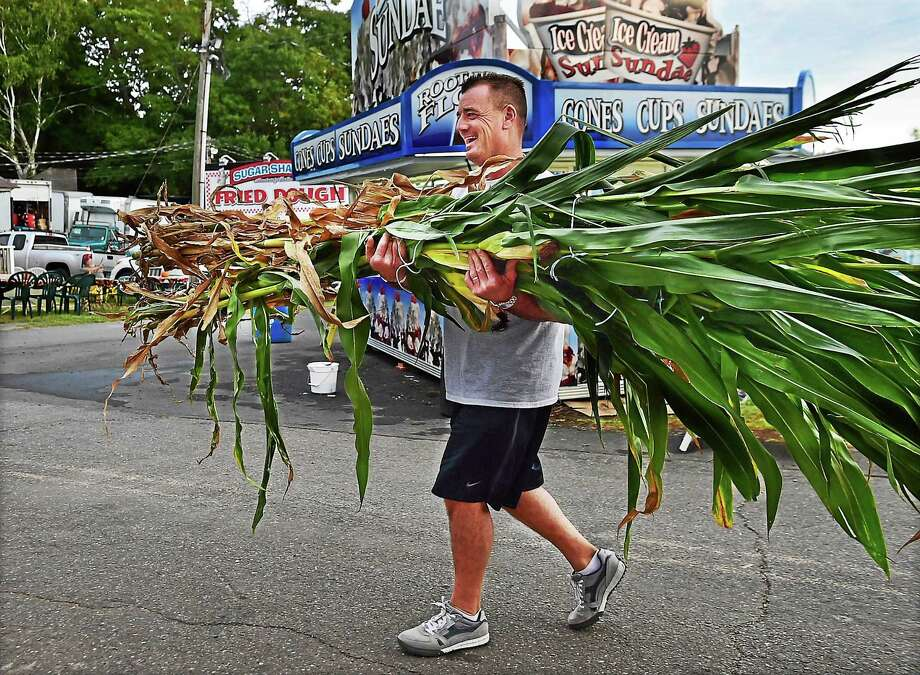 North Branford resident Larry Augur, of Larry Augur Farm carries in a corn stalk, Tuesday, September 22, 2015, to enter at the Durham Fair. The fair hours are Thursday from 4 p.m.- 10 p.m., Friday 9 a.m. - 10 p.m. Saturday 9 a.m. - 11 p.m. and Sunday 9 a.m. - 7 p.m. Photo: (Catherine Avalone - New Haven Register)     / New Haven RegisterThe Middletown Press