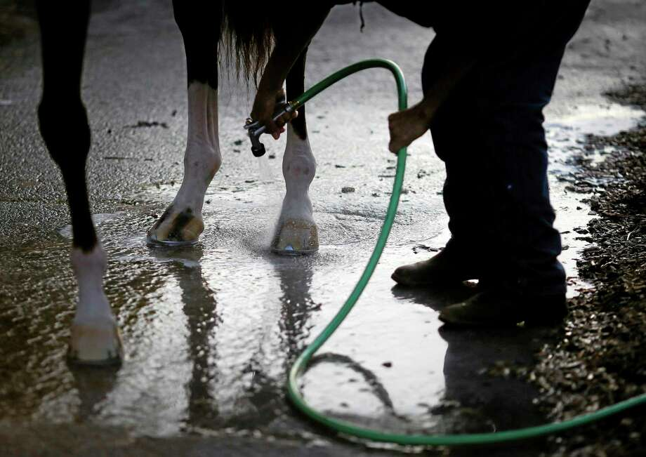 A groom sprays water on Kentucky Derby winner California Chrome's hooves after a workout at Pimlico Race Course in Baltimore on Saturday, the morning of the 139th running of the Preakness Stakes. Photo: Patrick Semansky — The Associated Press  / AP