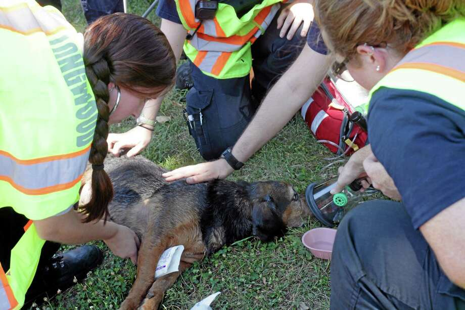 Emergency workers try to resuscitate a dog rescued from a house fire in this file photo. Middletown firefighters will soon have these life-saving kits on their rigs. Photo: File Photo