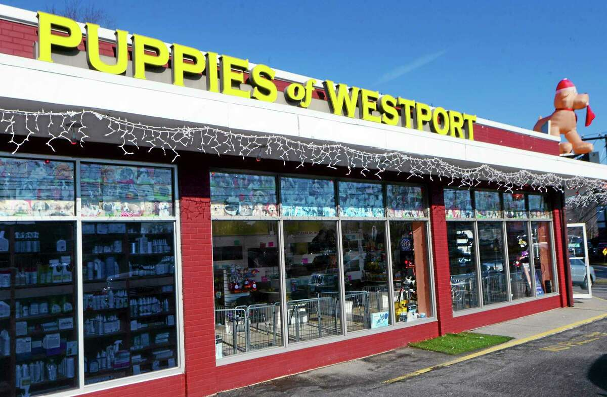 """Puppies of Westport, a pet shop in Norwalk, Conn., is open for business Wednesday, Jan. 15, 2014, after police said a woman using a rock tried to smash open the front door of the closed pet store. Police say 23-year-old Anouk Govil, of Norwalk, Conn., allegedly spotted by an officer using a rock to try and smash open the front door of the closed pet store said she """"wanted to set the puppies free."""" Govil was charged with third-degree criminal mischief. She posted $500 bond and was ordered to return to court next Tuesday. (AP Photo/The Hour, Erik Trautmann)"""